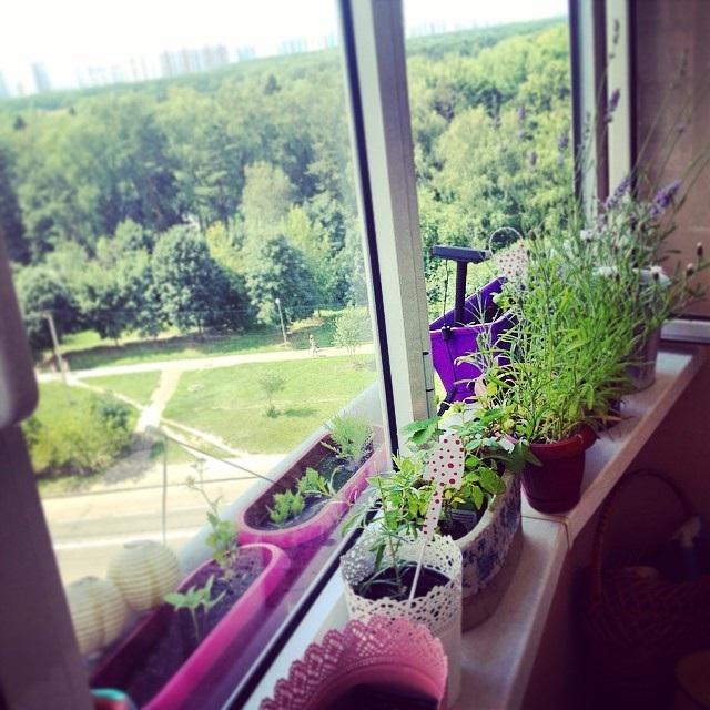 Зимний сад на балконе фото и, как его сделать своими руками..